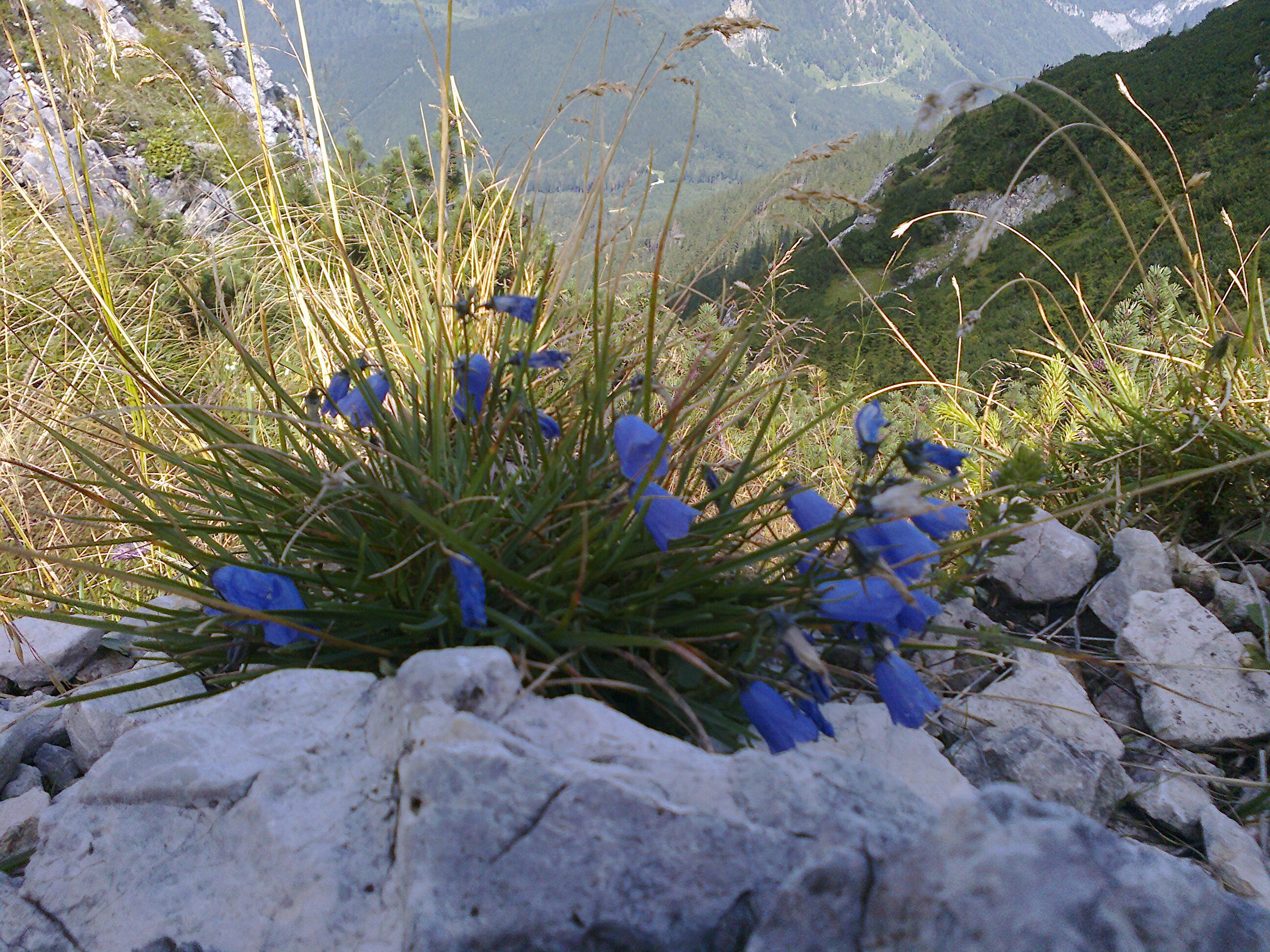 Bunte Bilder im                                         Blumenmeer